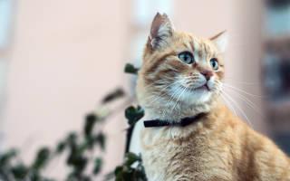 Мильбемакс для кошек зачем нужен?