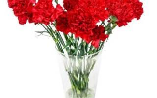 Какие цветы выбрать на похороны. Цветы на похороны женщины: как не ошибиться с выбором
