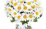 Красивый букет для женщины. Какие цветы подарить девушке. Пионы – будь счастливой