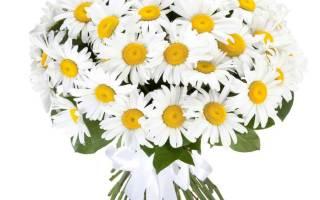 Красивый букет цветов для жены. Какие цветы подарить девушке