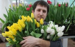 Мужественный букет. Какие цветы дарят мужчинам? Какие дарить мужчине цветы и принято ли это