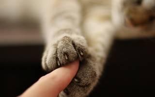 Звериная сущность женщины. Психология кошек. Люди, которые любят кошек