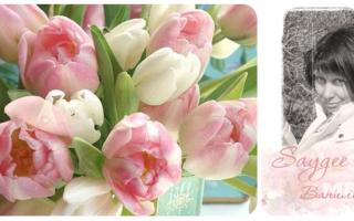 Открытка с днем рождения женщине тюльпаны. Стихи к подарку тюльпаны