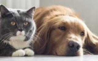 К чему снится много кошек: грядут положительные изменения в жизни? Снятся ли собакам и кошкам сны