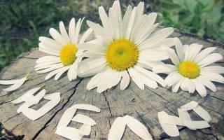 Почему мужчины дарят женщинам цветы. Что означает, когда мужчина дарит цветы